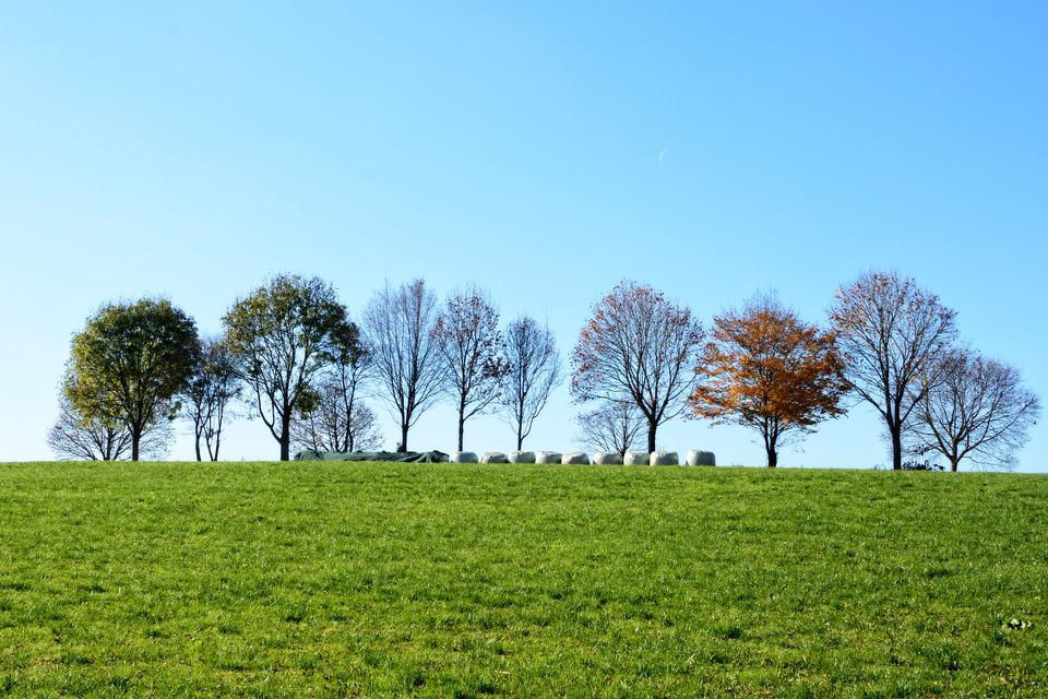 Grove Of Trees, Meadow, Sky, Nature, Trees, Field