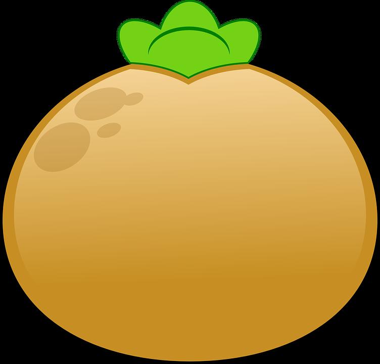 Potato, Sprouting, Brown, Green, Plant, Nature, Grow