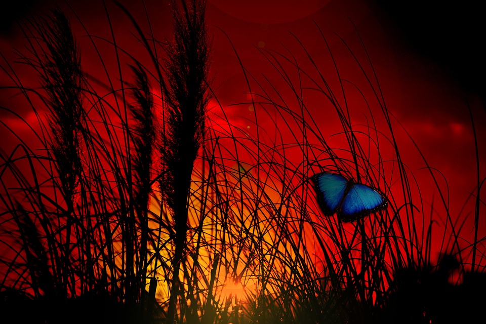Butterfly, Plant, Grass, Growth