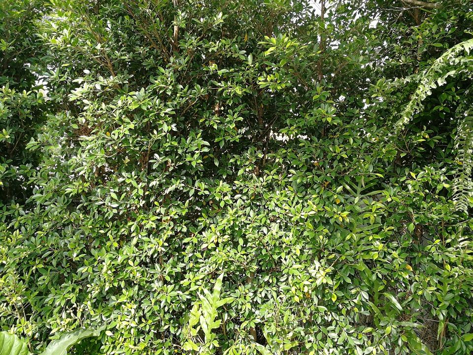Flora, Leaf, Nature, Growth, Tree