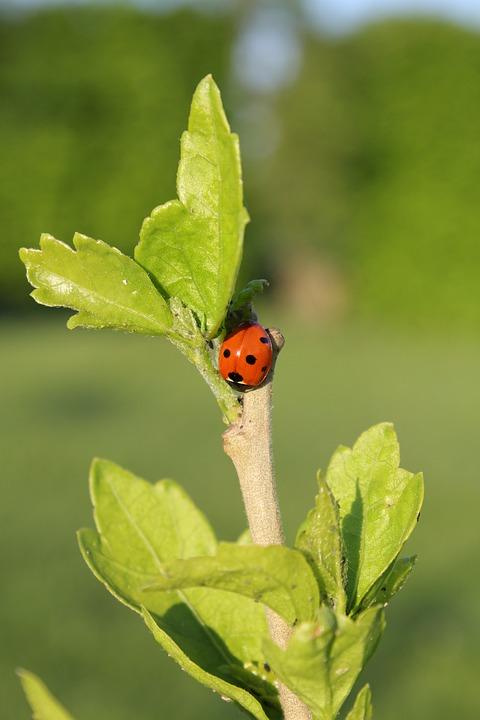 Leaf, Nature, Plant, Growth, Biology