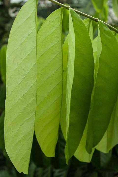 Leaf, Plant, Growth, Nature