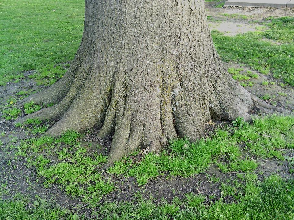 Roots, Solid, Tree, Nature, Wood, Growth, Strength