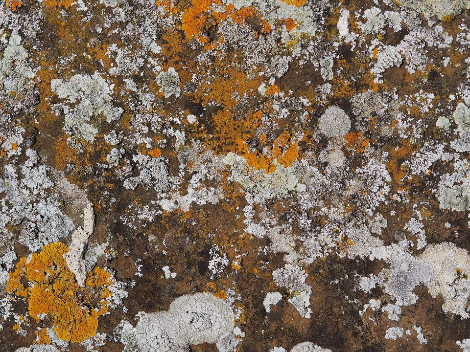 Lichen, Stone, Rock, Old, Patina, Growth