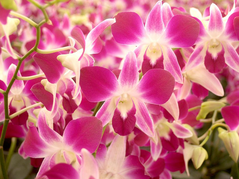 Orchid, Flower, Bright, Violet, Flora, Growth
