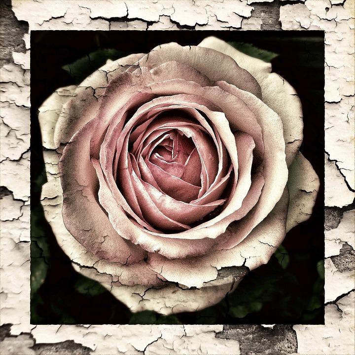 Vintage, Antique, Grunge, Nature, Leaves, Rose, Roses