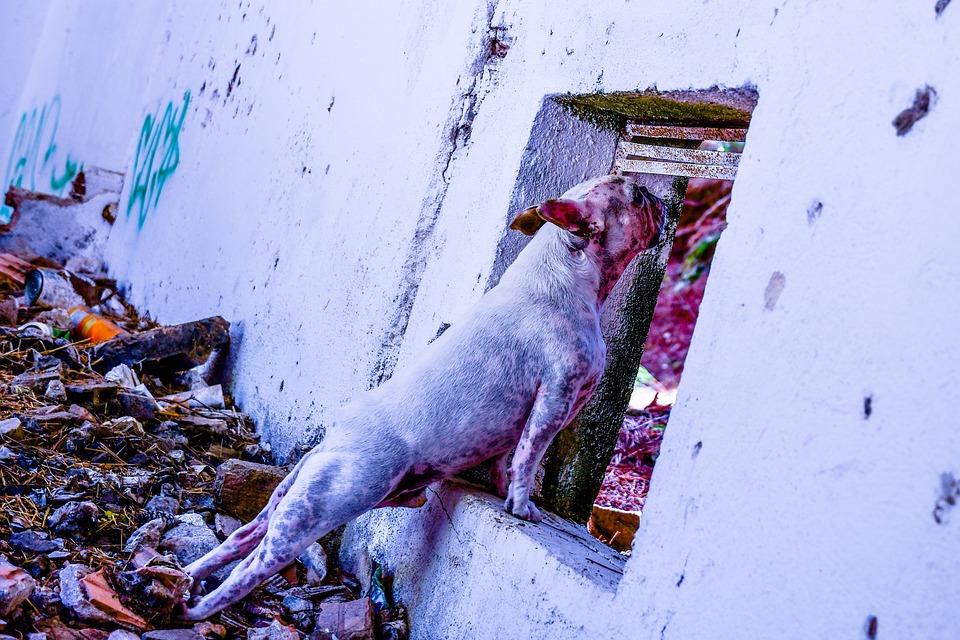 French Bulldog, Grunge, Bulldog, White, Trash