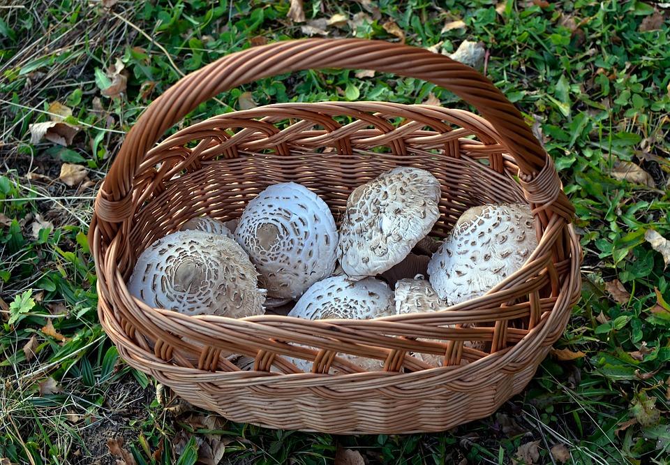 Mushrooms, Kite, Shopping Cart, Grzybiarstwo, Autumn