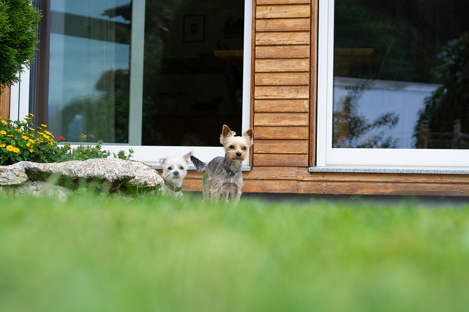 Dogs, Garden, House, Guard, Attention, Animal, Pet