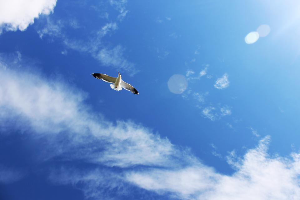 Seagull, Gull, Bird, Sky, Flight, Wings, Fly, Freedom