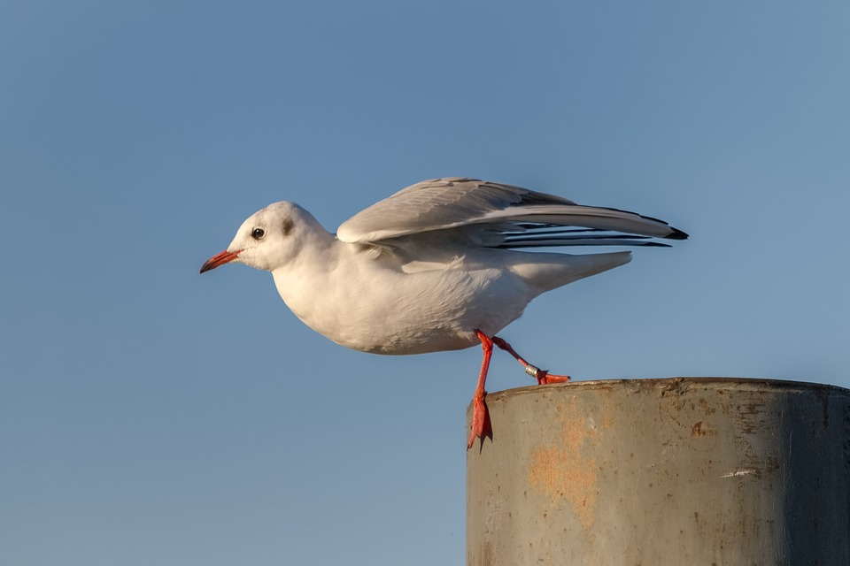 Gull, Lake Constance, Birds, Natural Beauty, Fly