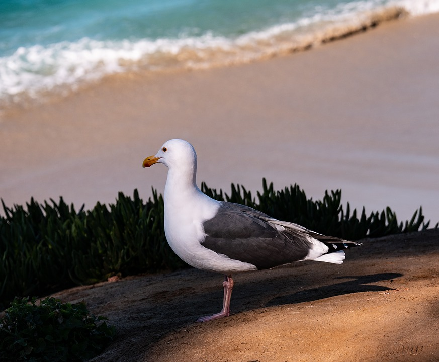 Bird, Gull, Peace, Standing Bird