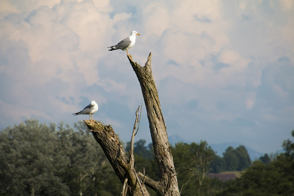 Gulls, Road, Log, Birds, Tribe, Nature, Day, Sit
