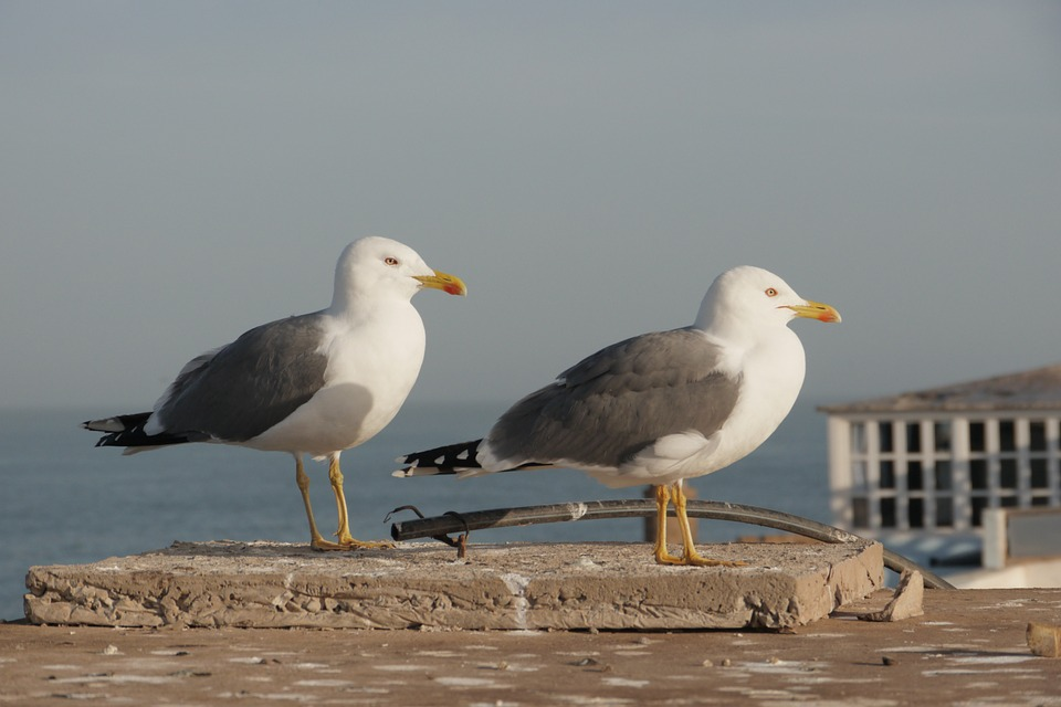 Gulls, Sea, Close