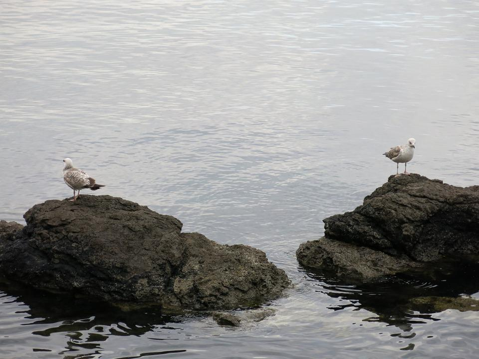 Gulls, Separated, Sea, Bird, Rock