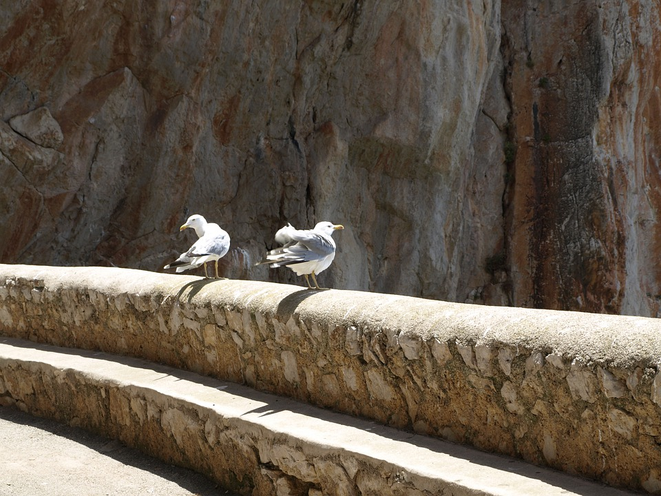 Seagull, Rock, Bird, Waterfowl, Nature, Sea, Gulls