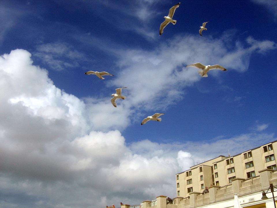Seagull, Gulls, Blue, Sky, Gull
