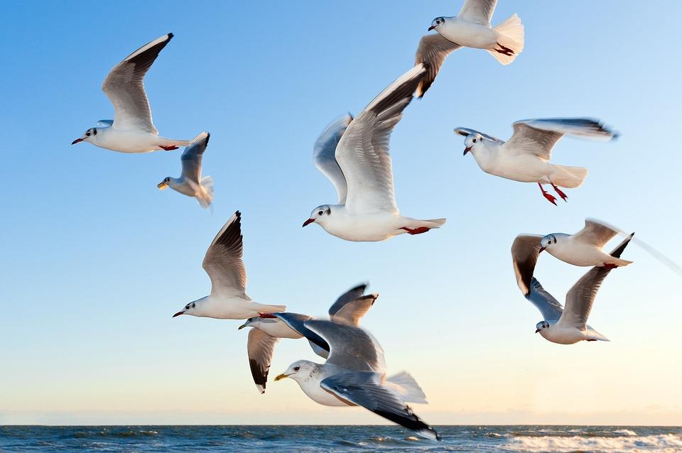 Gulls, Bird, Fly, Coast, Sunset, Sea, Mood, Sky, Water