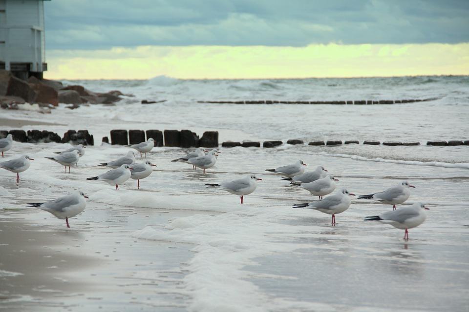 Gulls, Sea, Beach, Wave, Swell, Stormy, Wind, Forward