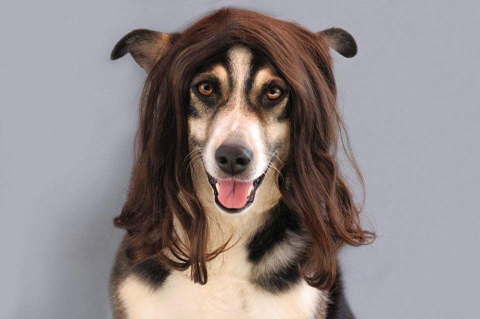 Dog, Portrait, Black, White, Wig, Smiling, Pet, Hair