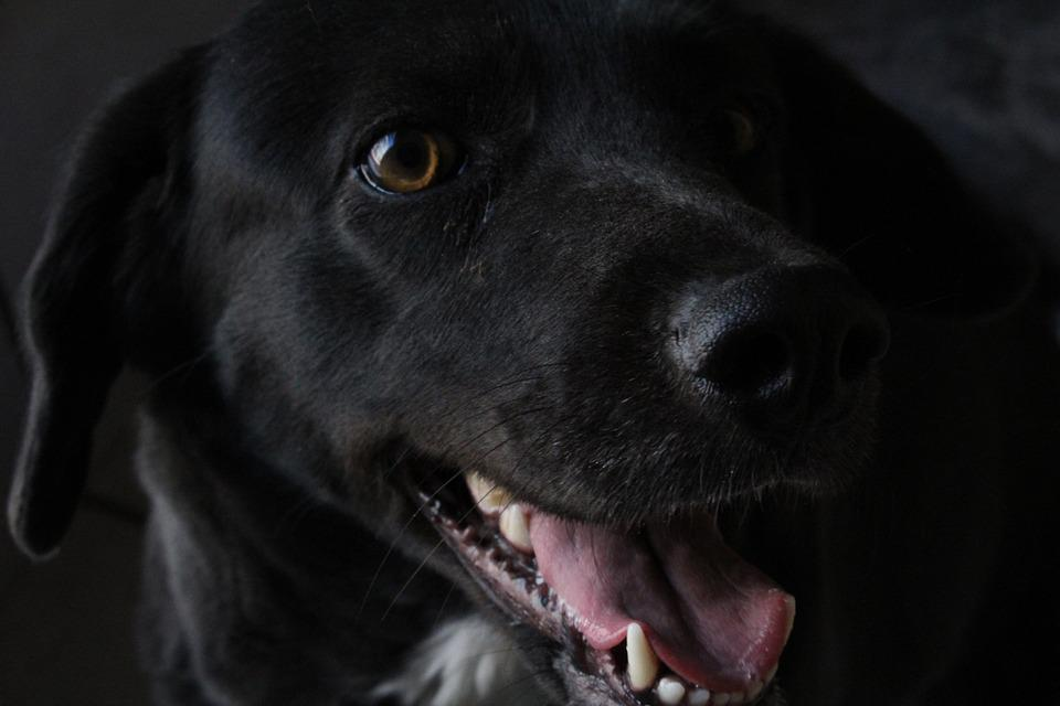 Dog, Black Dog, Happy Dog, Hairy, Puppy, Happy, Animals