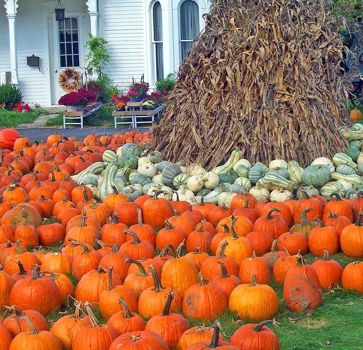 Pumpkins, Gourds, Corn, Stalks, Autumn, Fall, Halloween