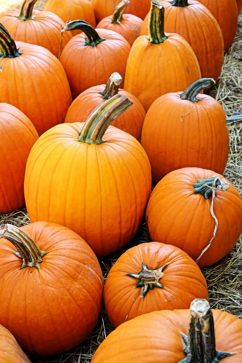 Orange, Pumpkin, Fall, Holiday, Autumn, Halloween