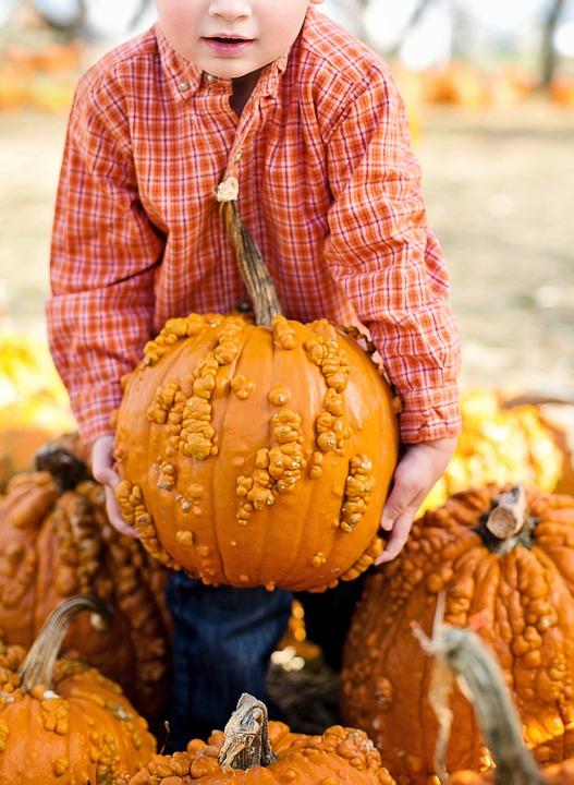 Pumpkins, Halloween, Autumn, Orange, Fall, Harvest