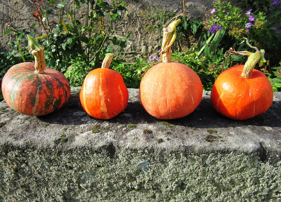 Pumpkin, Autumn, Stone Bench, Orange, Halloween