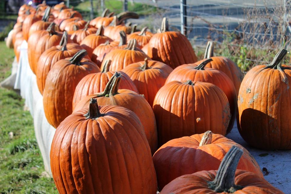 Pumpkin, Autumn, Orange, Great Pumpkin, Halloween