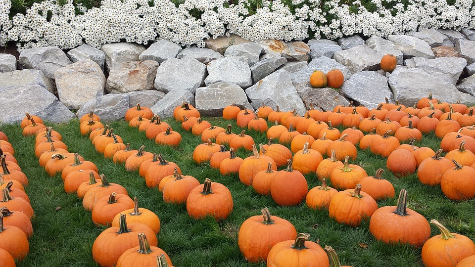 Fall, Pumpkin, Halloween, Orange, Harvest, October