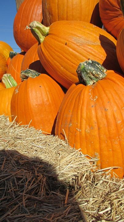 Thanksgiving, Halloween, Pumpkin, Patch, Vegetable
