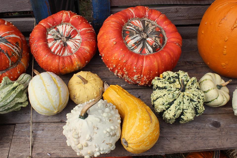 Pumpkins, Halloween, Autumn, Colorful, Decoration