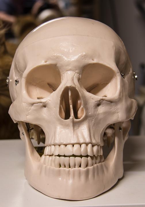 Skull And Crossbones, Skull, Halloween, Bone