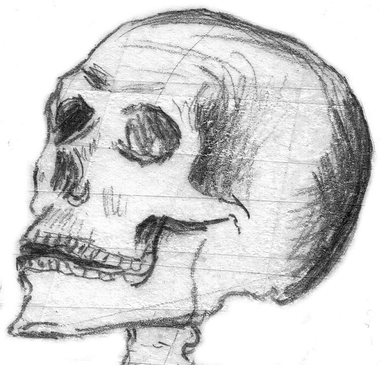 Free Photo Halloween Skull Bone Skull And Crossbones Skull Max Pixel