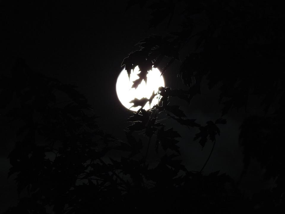 Free photo Halloween Spooky Backround Moon Moonlight - Max Pixel