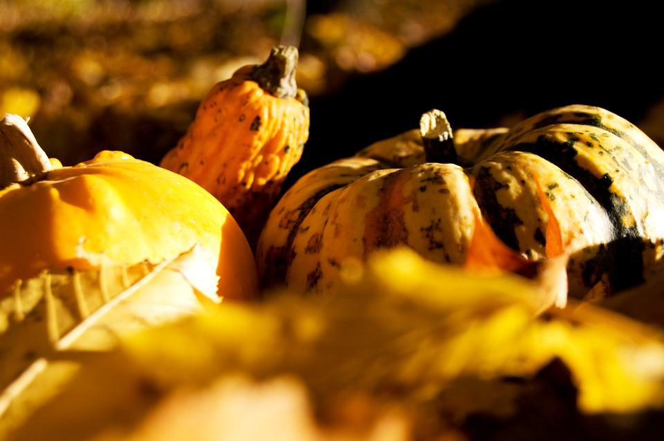 Pumpkin, Autumn, Yellow, Halloween, Gourd