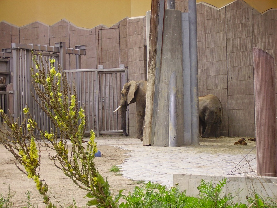 Elephant, Zoo, Animal Enclosures, Hallucination