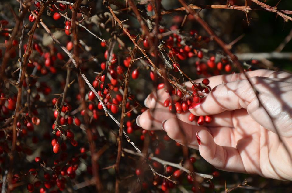 Berry, Red, Hand, Spring, Plant, Nature