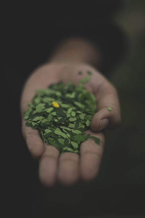 Blur, Close-up, Focus, Hand, Leaves