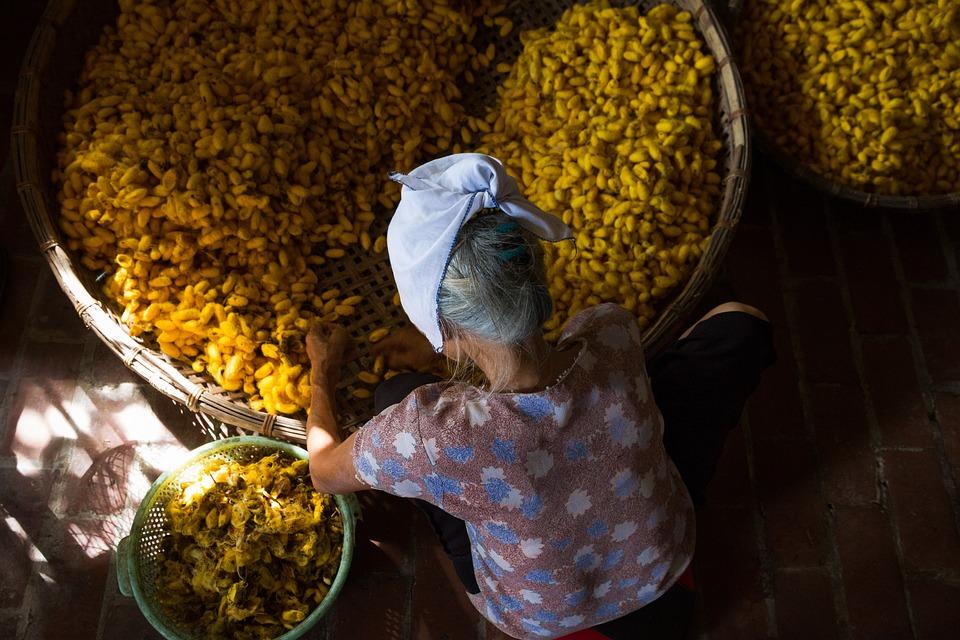 Silk, Yellow, Woman, Process, Work, Hand Made