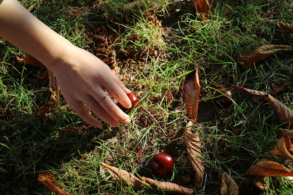 Chestnuts, Hand, Nature, Autumn