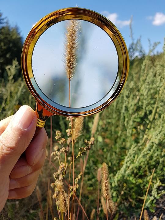Magnifying Glass, Magnification, Nature, Hand, Grass