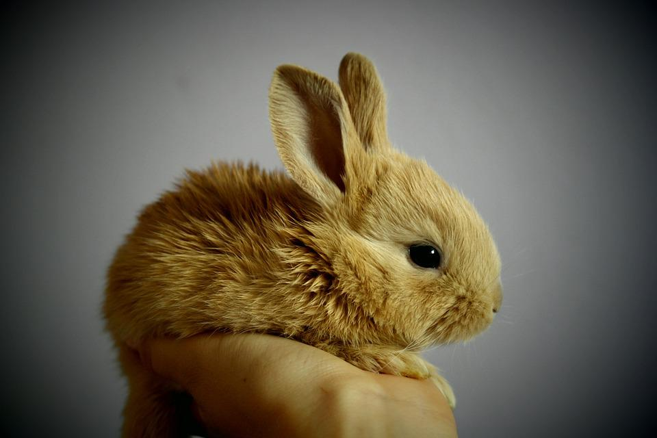 Rabbit, Palm, Hand, Snatch, Redheaded, Ears, By, Detail