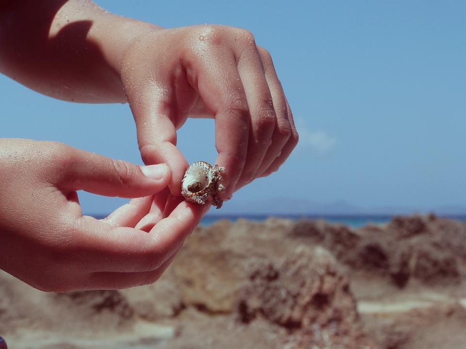 Hand, Hand Shell, Sea