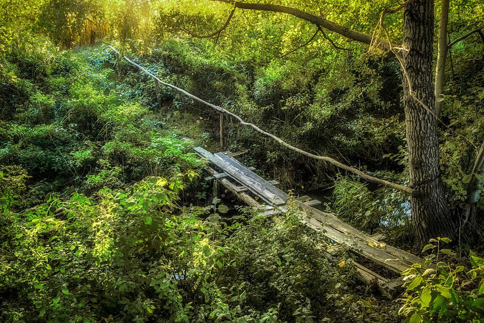 Bridge, Lets Go, Forest, Wooden, Handrail, The Path