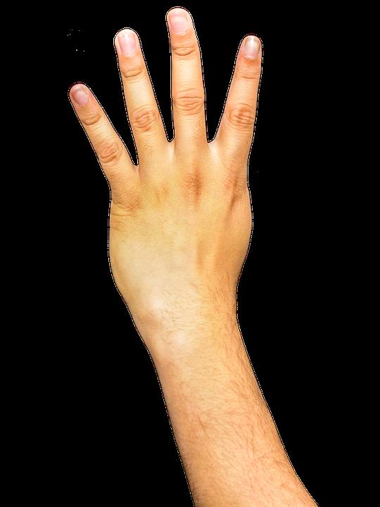 Hands, Fingers, Arm, Png