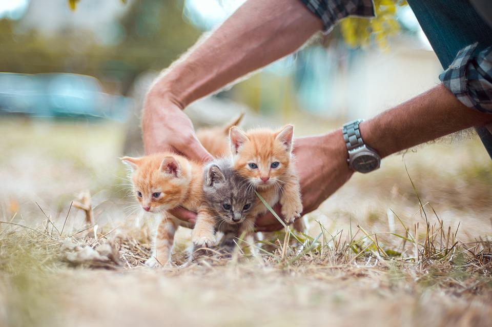 Kittens, Small, Hands, Hold, Grass, Nature, Summer