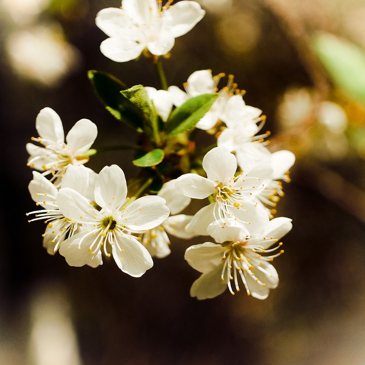 Flowers, Spring, Nature, Tree, Handsomely, Branch