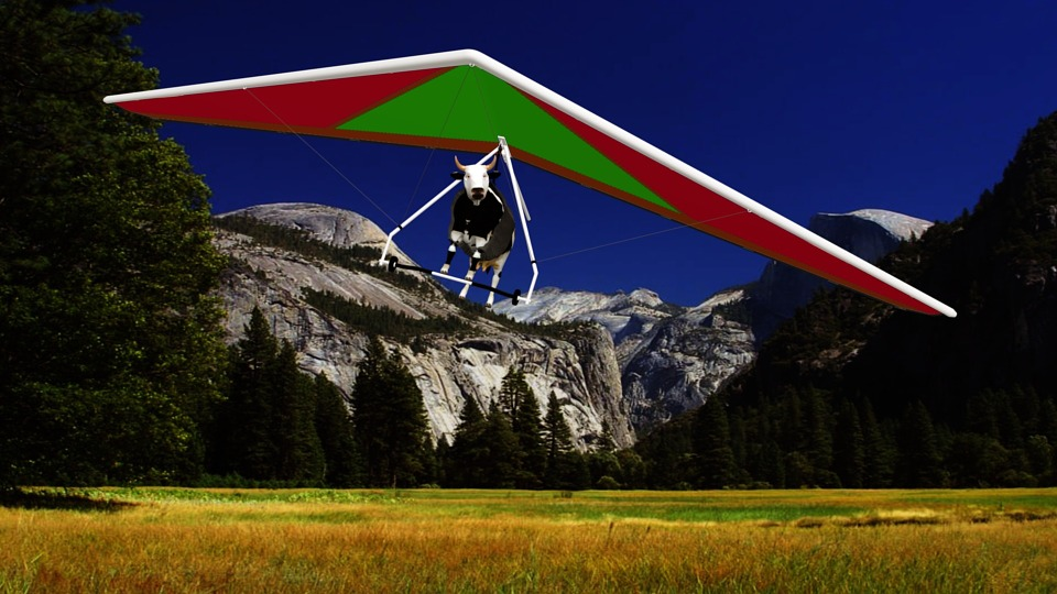 Cow, Hang Gliding, Field, Prairie, Mountain